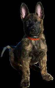 Fire puppy